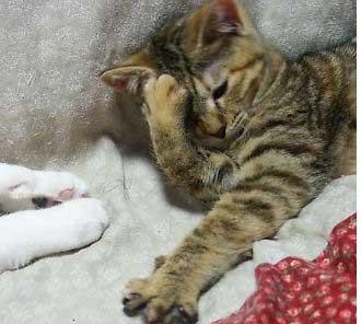 headache_cat.jpg